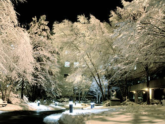 Black Sky White Trees