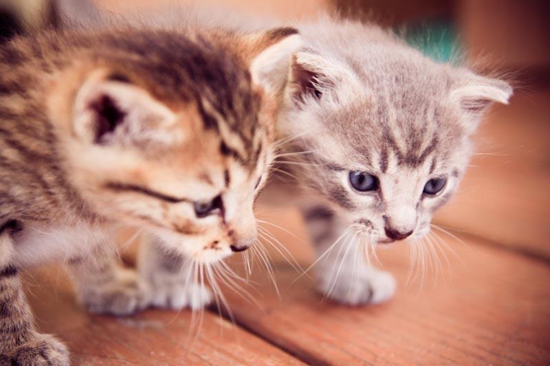 Kitties. by stillframeimages