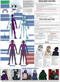 Halcyon race sheet