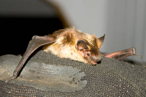 Bat in my house. #4