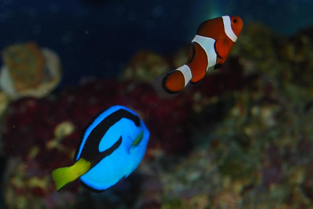 The Real Finding Nemo by CetaceanNerd on DeviantArt