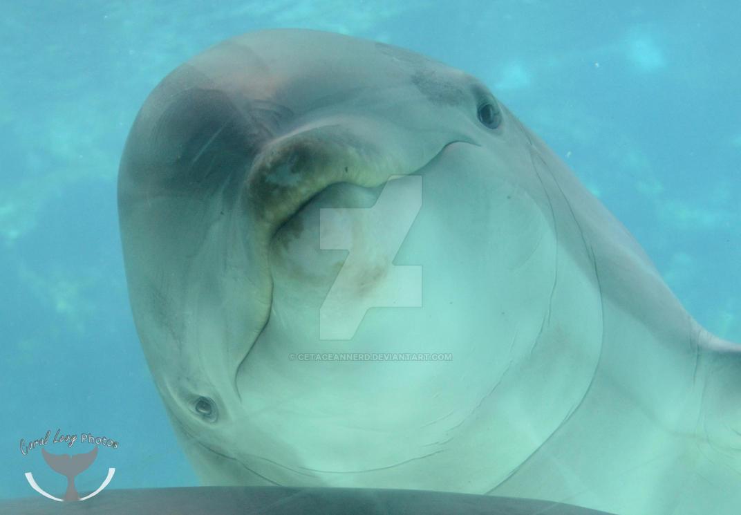 Curious Face by CetaceanNerd