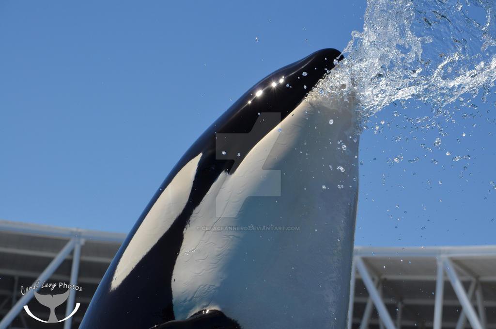 Water Spout by CetaceanNerd