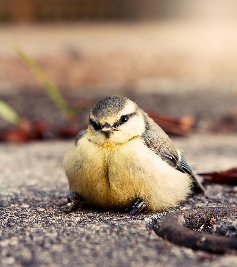 posing bird by FrionR