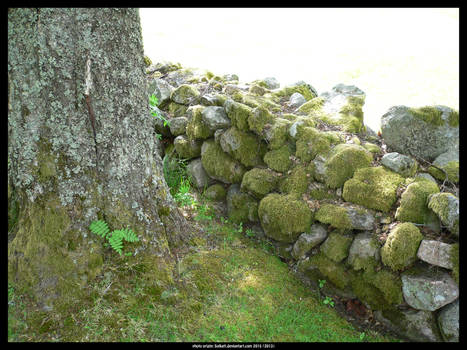 Mossy old stone wall