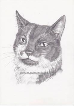 Frasse-katten  [commission]