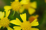 Texture: Wet Flowers V