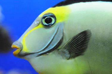 Birch Fish IV by LDFranklin