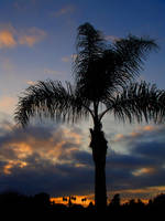 Palm Sunset by LDFranklin
