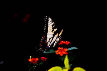 Swallowtail II by LDFranklin