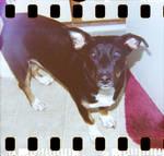 Diana 1 2 Rosie by LDFranklin