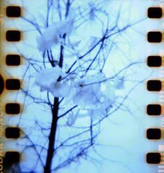 Diana 2 31 Tree by LDFranklin