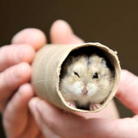 CPR Hamsters XIII by LDFranklin