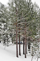 Lensbaby Snow VIII by LDFranklin