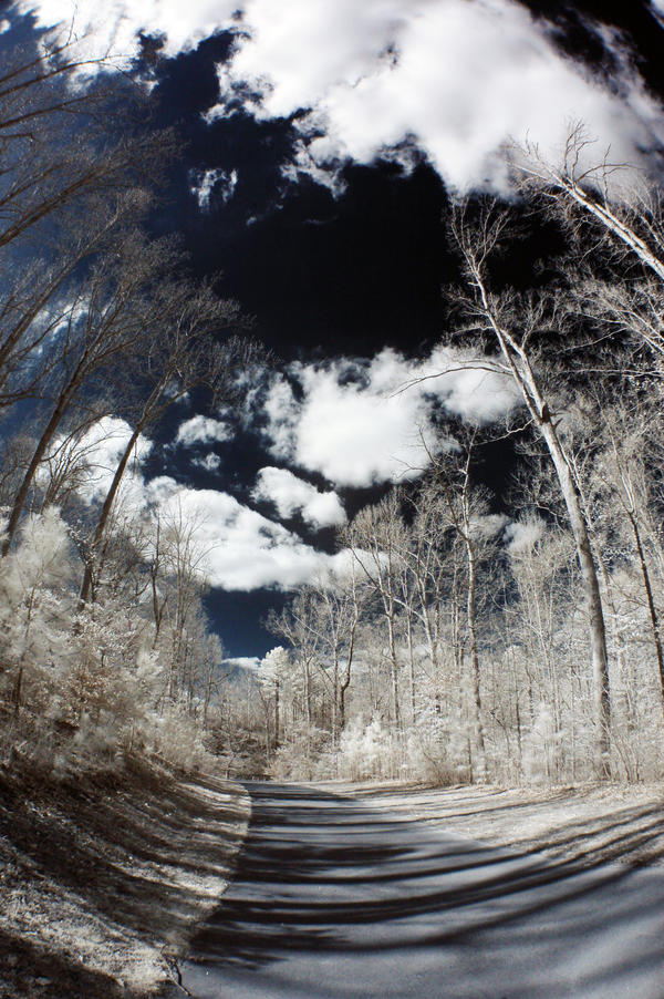 Infrared Fisheye V by LDFranklin