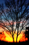 Lensbaby Sunset II by LDFranklin
