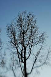 Tree Full Of Birds by LDFranklin