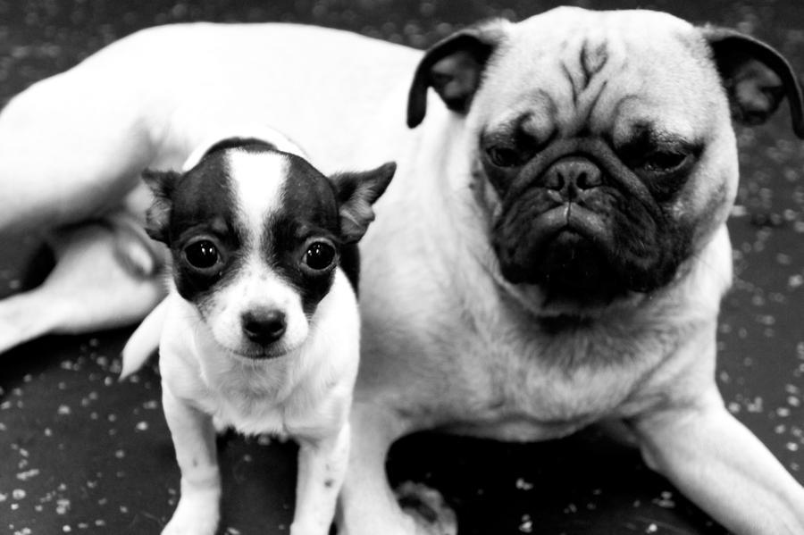 Doggie Daycare XIX by LDFranklin