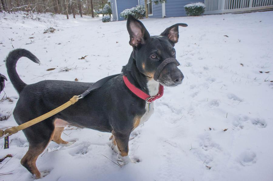 Snow Doggies IV by LDFranklin