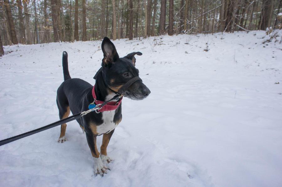 Snow Doggies I by LDFranklin