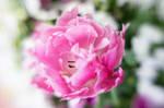 Azalea Garden Lensbaby III