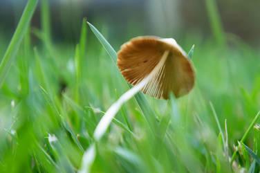 Grass And Mushroom II by LDFranklin