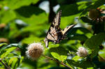 Garden Flowers And Butterflies II by LDFranklin