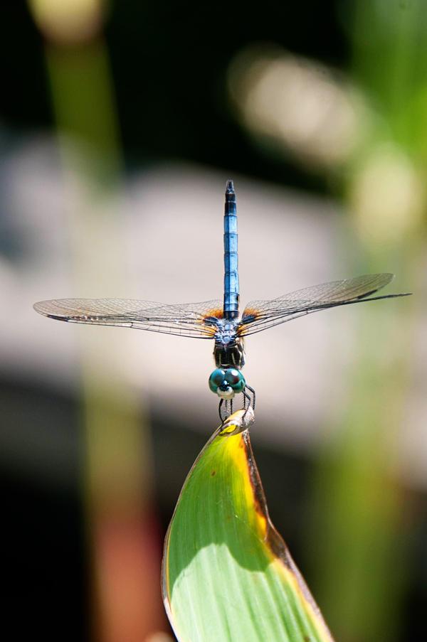 Botanical Garden Summer VIII by LDFranklin