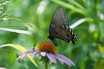 Botanical Garden Summer XXVI by LDFranklin