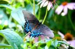 Botanical Garden Summer XXIV by LDFranklin