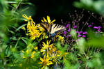 Botanical Garden Summer XXIX by LDFranklin