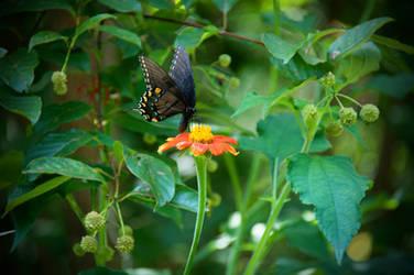 Botanical Garden Summer XXXII by LDFranklin