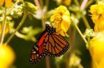 Garden Butterflies III by LDFranklin
