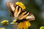 Garden Butterflies VII by LDFranklin