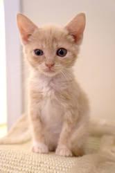 New Kitten III by LDFranklin