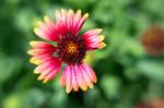 Botanical Garden Lensbaby V by LDFranklin