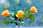 Evening Yellow Roses IX by LDFranklin