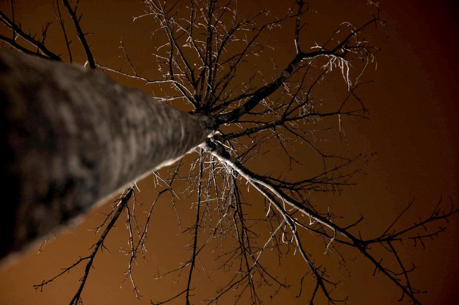 Bare Tree IR by LDFranklin
