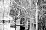 Playground Trees Double Exposure by LDFranklin