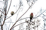 Winter Birds I