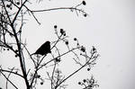 Winter Birds VII