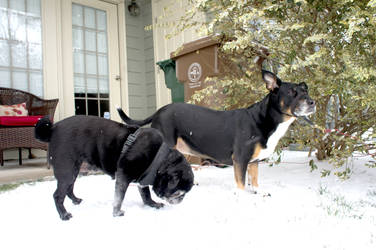 Winter Dogs XII by LDFranklin