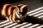 Cat Stripes I by LDFranklin