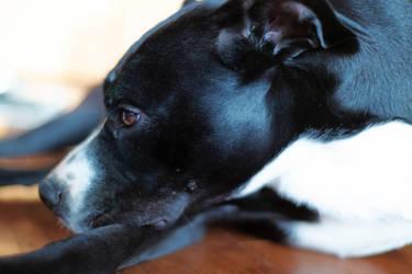 Bruno Dog III