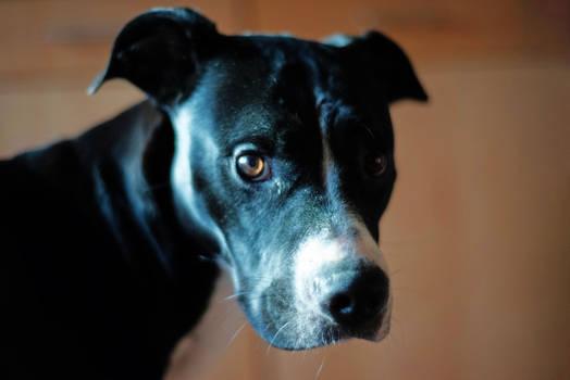 Bruno Dog II