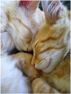 Snuggle Kittens by LDFranklin
