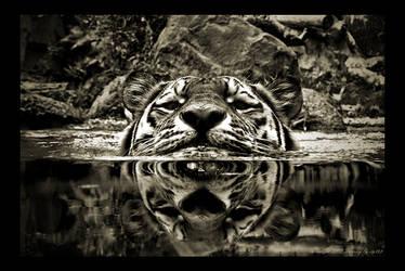 Tiger by stg123
