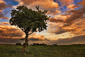 lonely tree by stg123