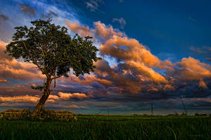 tree at sunset by stg123