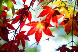 leaf by stg123